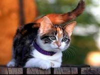 Выбирая клички для кошек важно