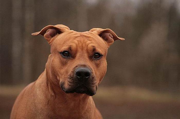 ПОРОДЫ СОБАК Собаки  каталог пород собак России