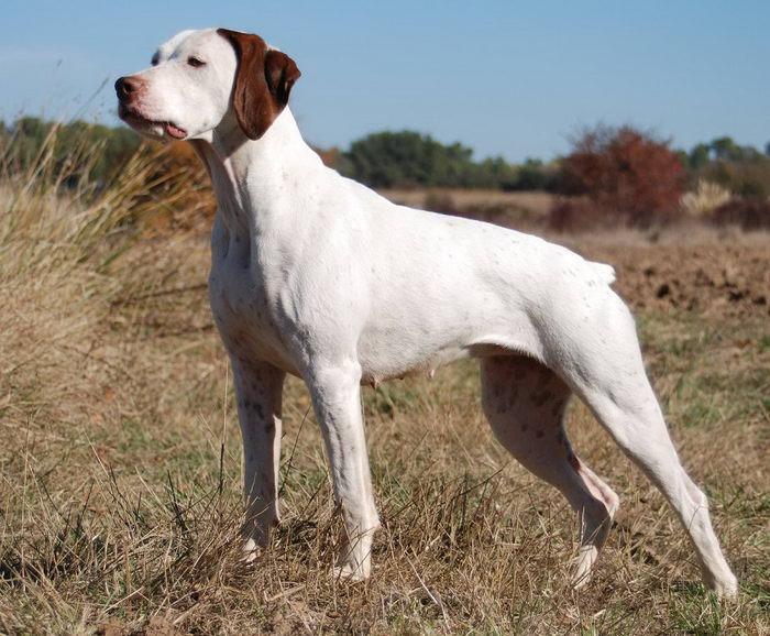 фото всех собак с названием породы