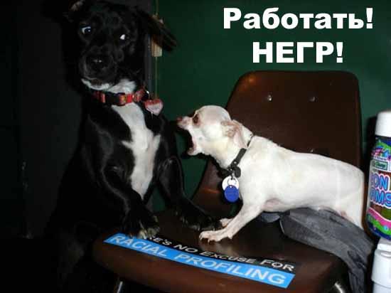 http://natura.spb.ru/funny/17/001611.jpg
