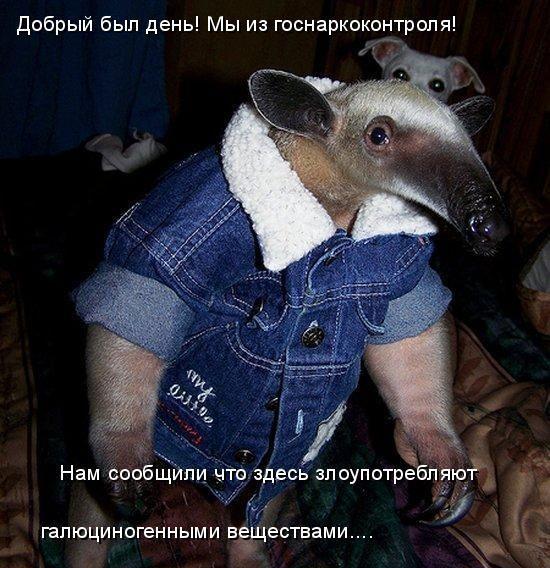 про картинки очень животных смешные с надписями