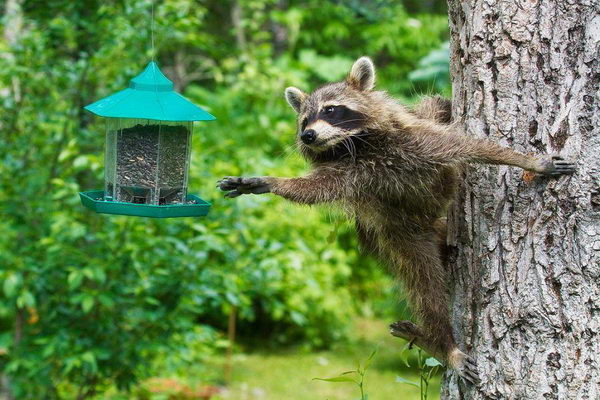 Картинки природа забавные животные