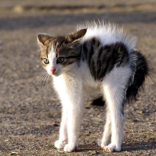 свой цитатник или сообщество!  Какие милые котята!  Прочитать целикомВ.
