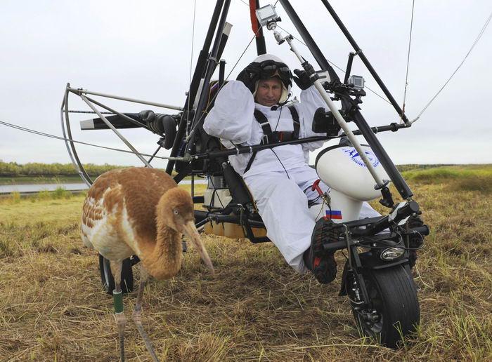 Стерх, белый журавль (Grus leucogeranus) и Президент России В.В.Путин на дельтоплане