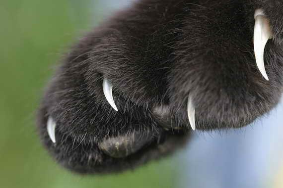 Що у кішки на думці? або