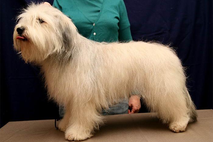 Породы собак: зачем так много? Breeds_why_04
