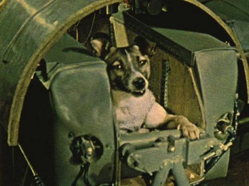 Полета собак белка и стрелка в космос