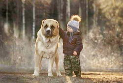 ТОП 10 самых крупных пород: самая большая собака в мире и рекорды