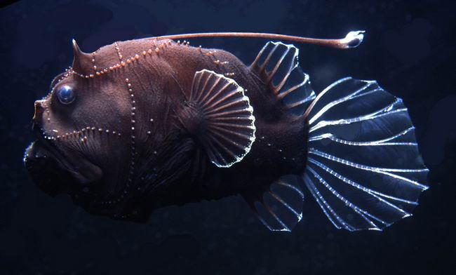 Морские черти - Животные и природа заглатывать