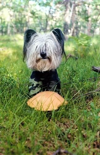 Собака с грибом