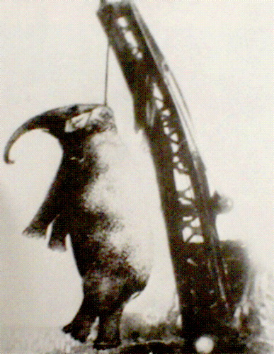 Казнь слонихи Мэри