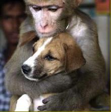 Дружба тварин - сюжет для фільму