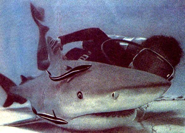 Акула размером с человека.