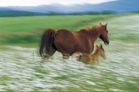 Ах вы, кони, мои кони!