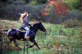 Лошадь с наездником
