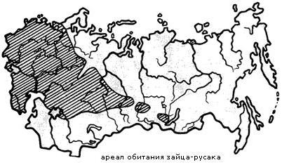 Карта обитания зайца-русака в нашей стране