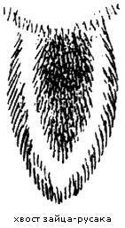 Рисунок хвоста заца-русака
