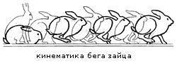 Кинематика бега зайца-русака