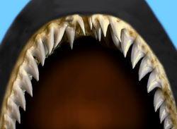 Болять у тварин зуби?