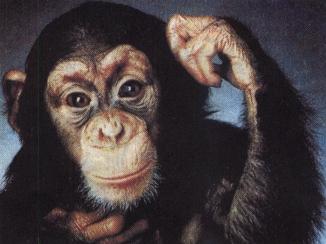 Приматы хорошо были известны в
