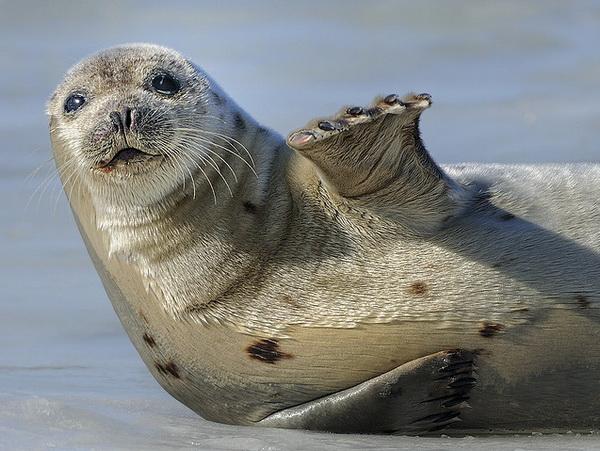 Тюлень устроил драку с российскими моряками