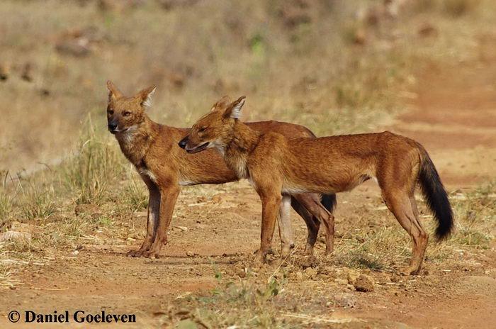 Картинки природы среда обитания волков