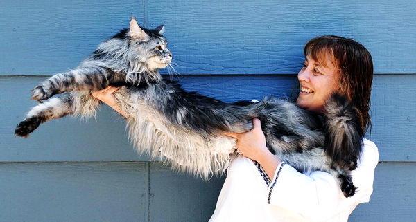 найдовший кіт – новий рекорд