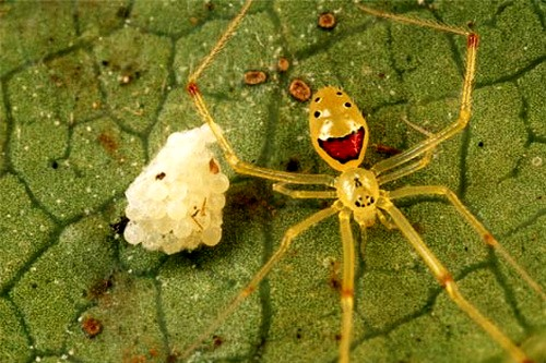 http://natureworld.ru/news/2011/spider_smile_01.jpg