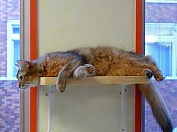 Cat Cafe – відмінна заміна притулкам для тварин