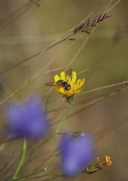 Мед в сотах может храниться вечно!