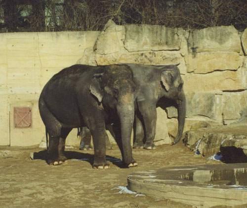 Слоны общаются шифрованным языком
