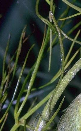 Как происходит дыхание растений