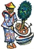Бонсай - выращивать на тарелке
