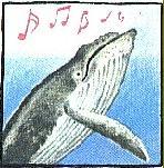 Кити любят петь песни