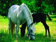 Лошади хорошие друзья