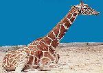 Жирафу иногда трудно жить