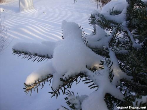 Георгий перовский о природе января