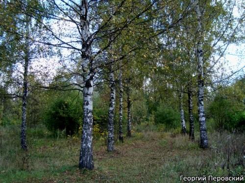 Деревья как люди георгий перовский