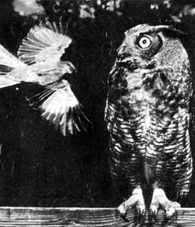 Синяя птица опера важная птица