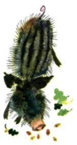 Дикие кабан в осенней листве