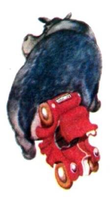 Бегемот с автомобилем на хвосте