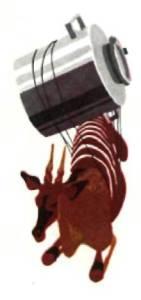 Бык с канистрой на спине
