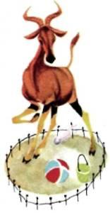Коровья антилопа в песочнице