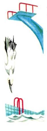 Олуша ныряет с трамплина в бассейне