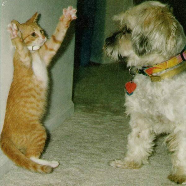 Маринам, картинки и фото кошек и собак с надписями