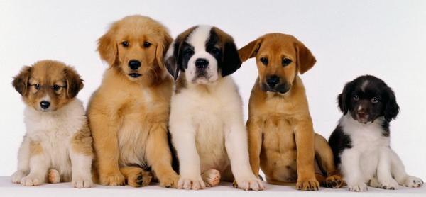 Хочу харчо! - Страница 5 All_other_dogs_puppy